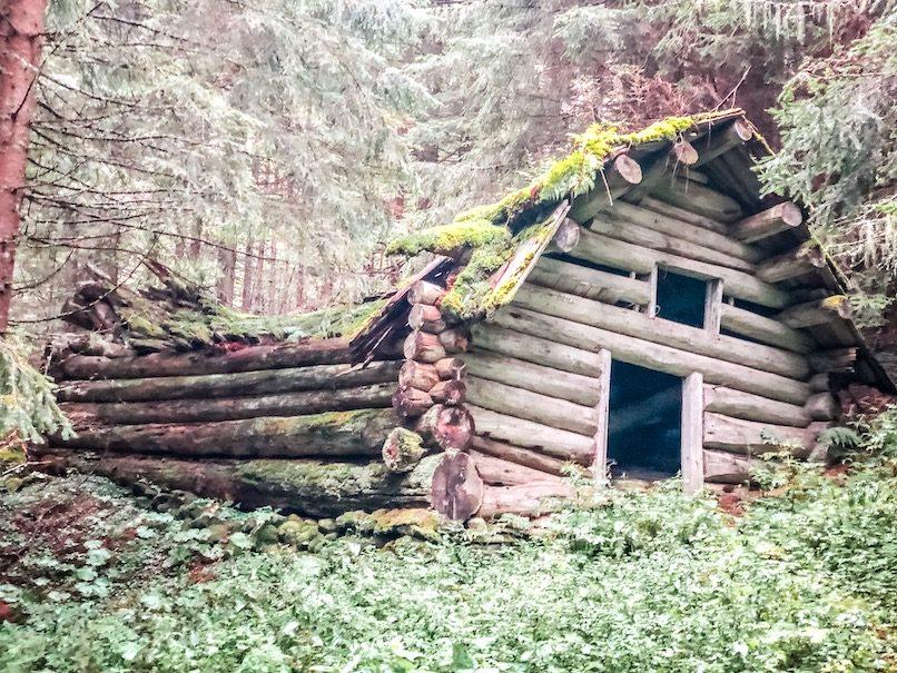 Wandern mit Hund Kärnten Wald Märchenwald urig weitwandern