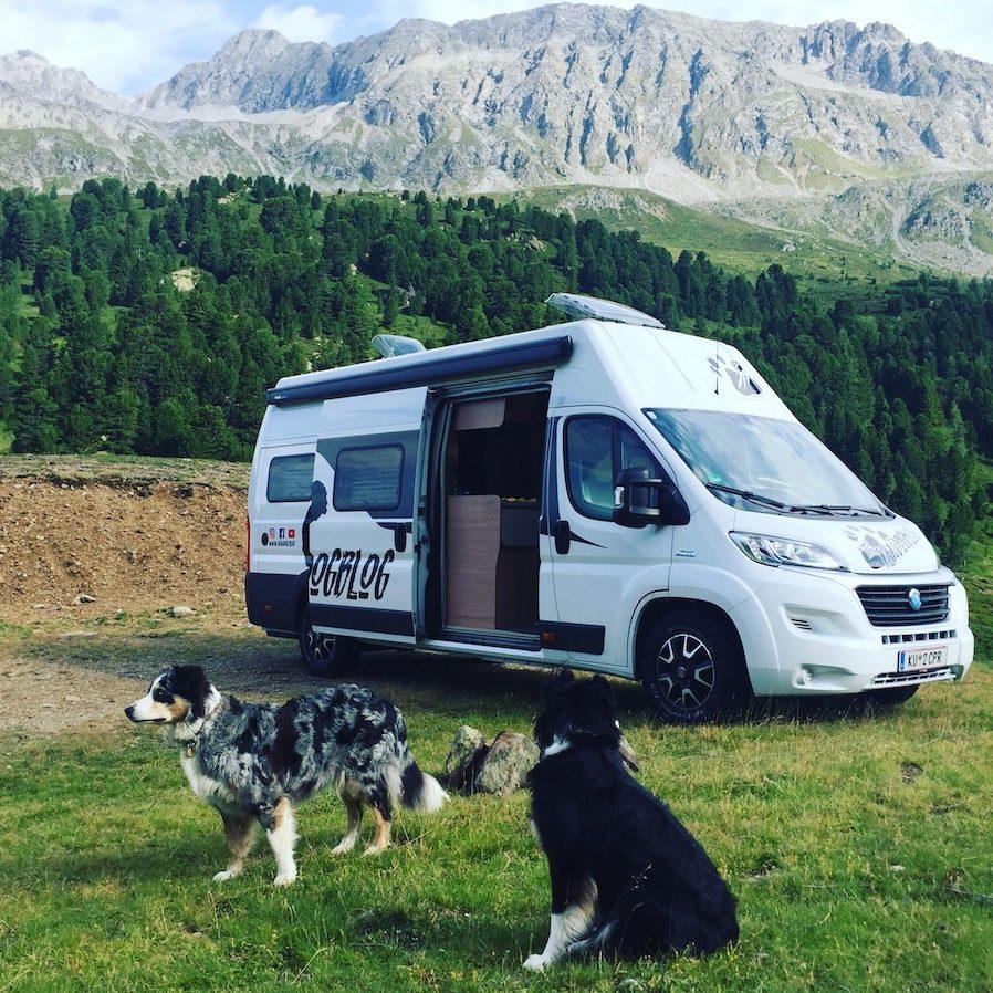 Camping mit Hund Kastenwagen Australian Shepherd Knaus Freeway