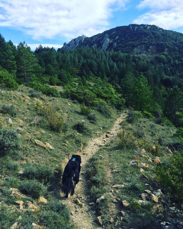 Südfrankreich GR 367 Frankreich Wandern mit Hund Weitwanderweg Sentier Cathare Aude Pays Cathare