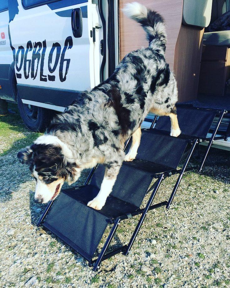Friedrischs Hundetreppe Hunderampe Einstigshilfe Camping mit Hund Zubehör Wohnmobil Australian Shepherd