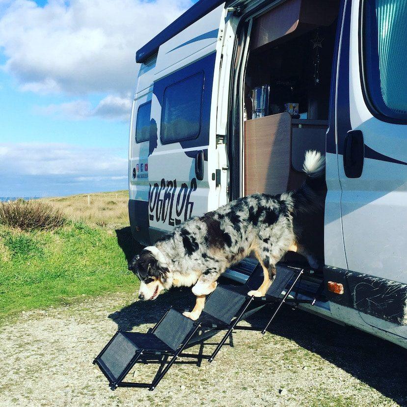 Friedrischs Hundetreppe Einstigshilfe Hunderampe Camping mit Hund Zubehör alter Hund