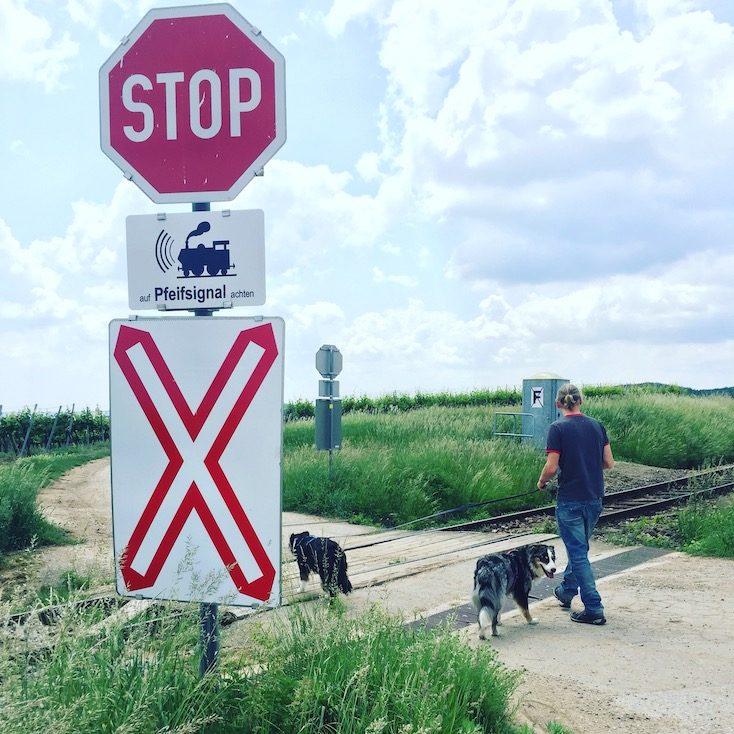 Weinviertel Wandern und Camping mit Hund Österreich Retz Thayatal