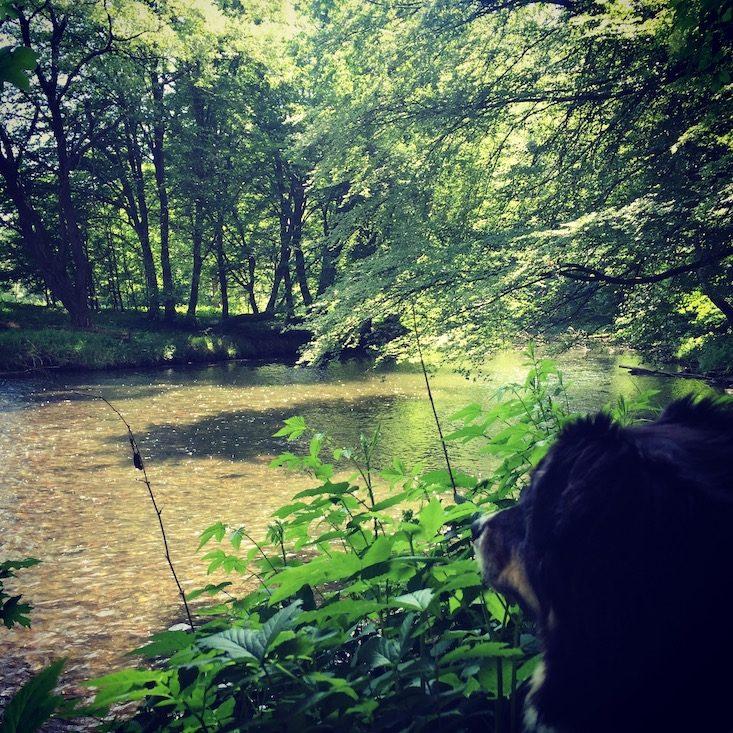Wandern mit Hund Thayatalweg Retz Niederösterreich Weitwanderung