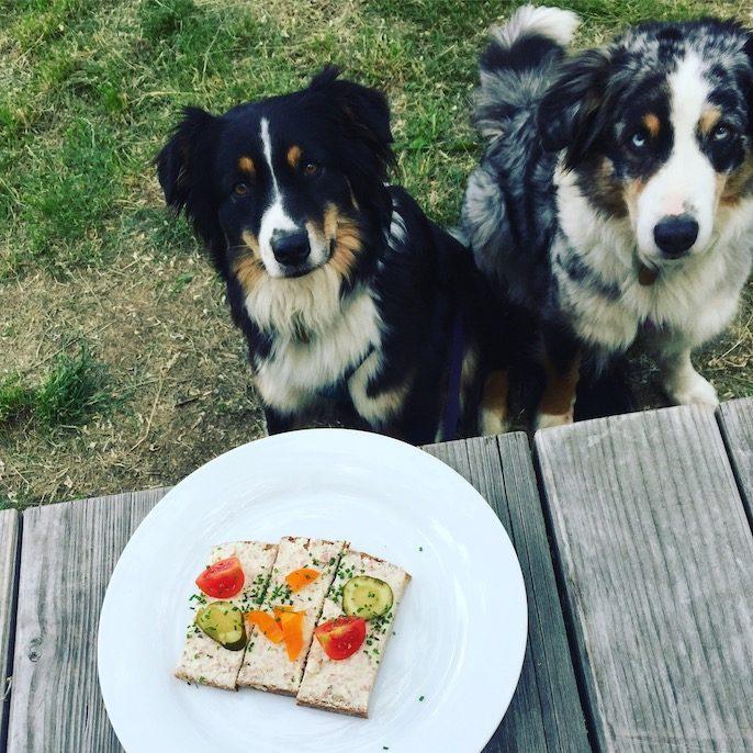 Weinviertel Retz Camping mit Hund Australian Shepherd
