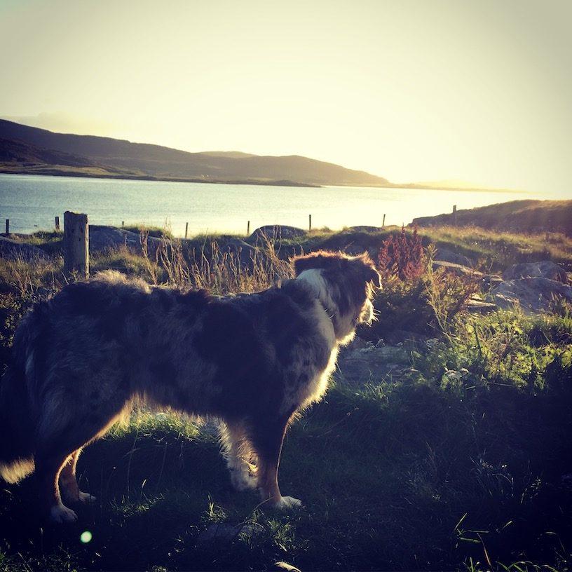 Luskentyre Beach Schottland Camping mit Hund Roadtrip Lewis und Harris Hebriden