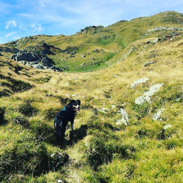Pallspitze Kitzbüheler Alpen Brixental Kelchsau Langer Grund Wandern mit Hund Australian Shepherd