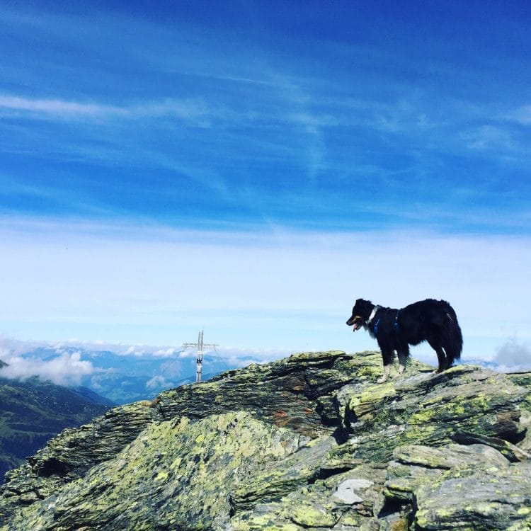 Pallspitze Kitzbüheler Alpen Brixental Wandern mit Hund Tirol