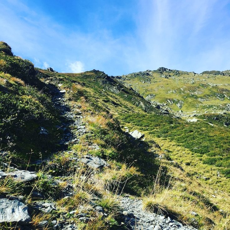 Pallspitze Kelchsau Brixental Kitzbüheler Alpen Gasberge Wandern mit Hund Almwandern