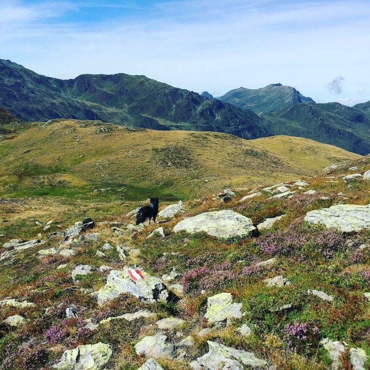 Wandern mit Hund Kelchsau Langer Grund Brixental Grasberge Heidelbeeren