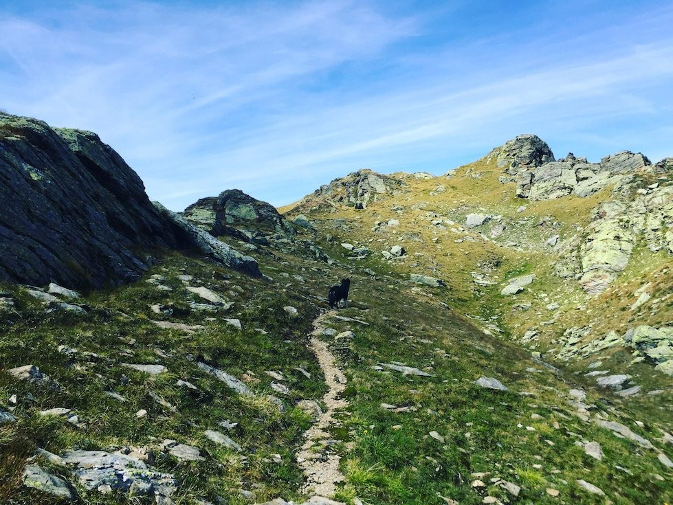 Pallspitze Wandern mit Hund Australian Shepherd Kelchsau Brixental Tirol Kitzbüheler Alpen Grasberge
