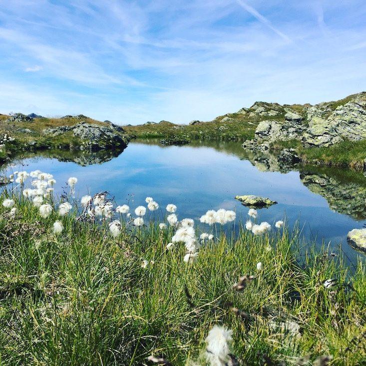 Blaue Lacke Wandern mit Hund Kelchsau Brixental Langer Grund Kitzbüheler Alpen