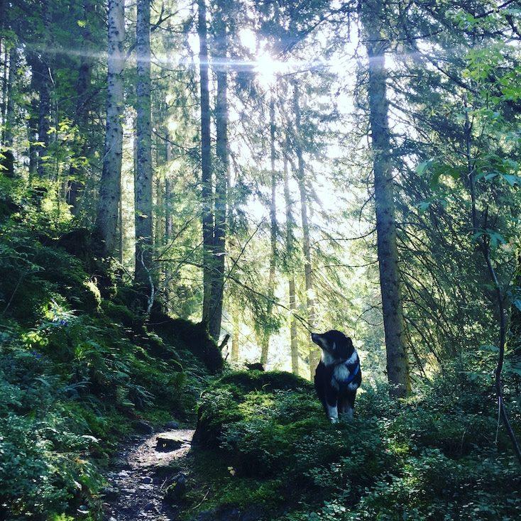 Wandern mit Hund Tirol Brixental Kelchsau Langer Grund