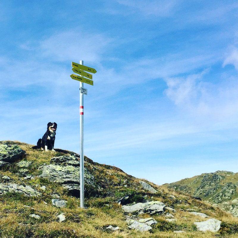 Pallspitze Wandern mit Hund Kelchsau Brixental Langer Grund Tirol
