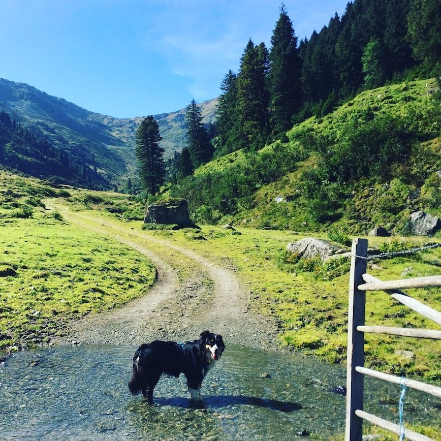 Frommtal Frommalm Kelchsau Brixental Langer Grund Wanderung wandern mit Hund Australian Shepherd