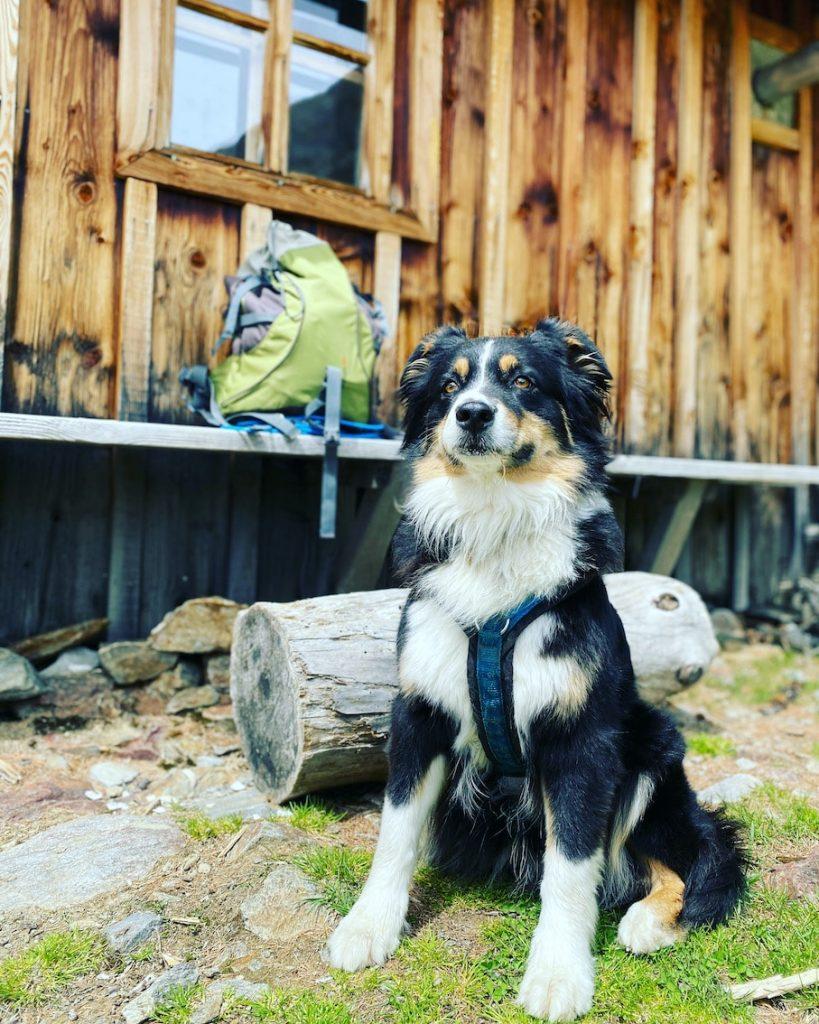 Unterwegs mit Hund camping wandern Osttirol Villgratental Oberstaller Alm Australian Shepherd