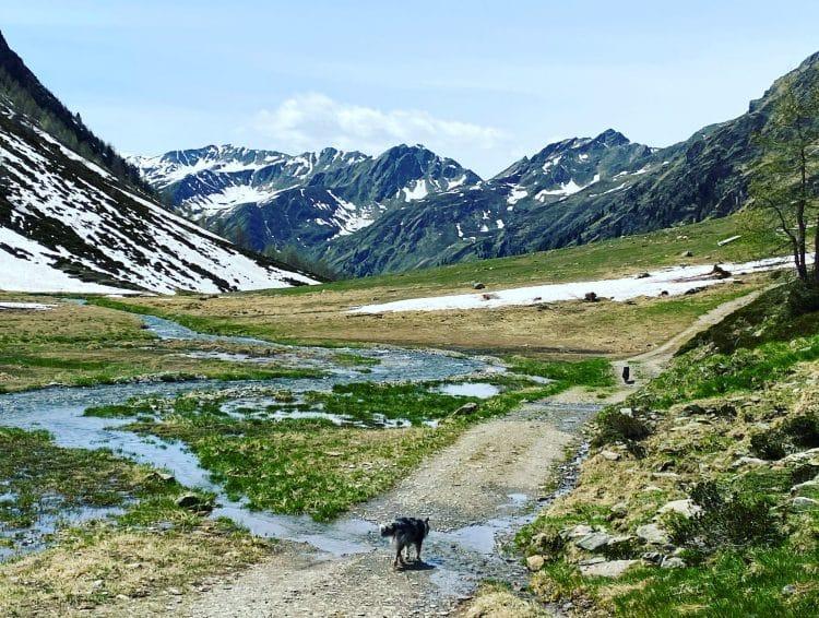 wandern mit Hund Österreich Alpen Alleine Verreisen Solo Travel