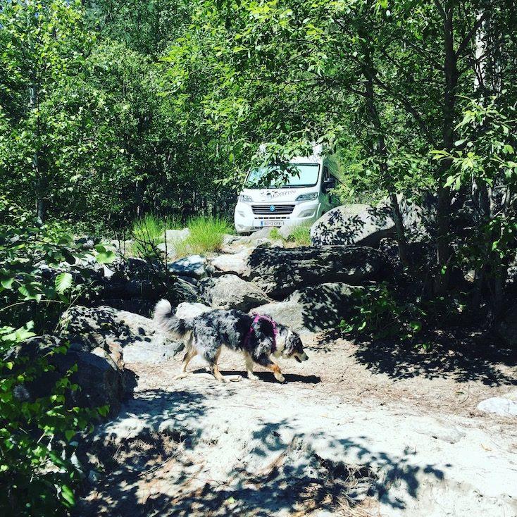Vénéon Französische Alpen Camping Wohnmobil Campingbus Wildcamping van hund Fluss