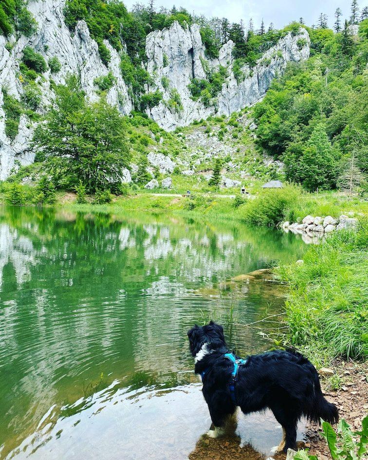 Wandern mit Hund in Kroatien Velebit Gebirge Australian Shepherd