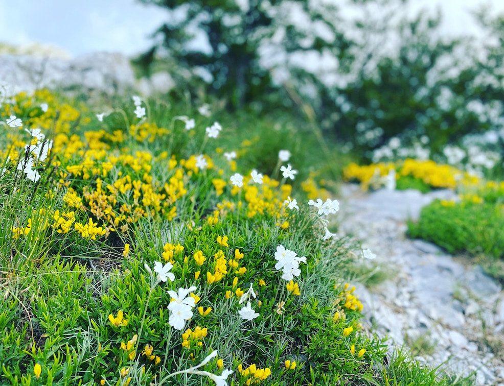 Wandern mit Hund im Velebit Gebirge Camping Urlaub