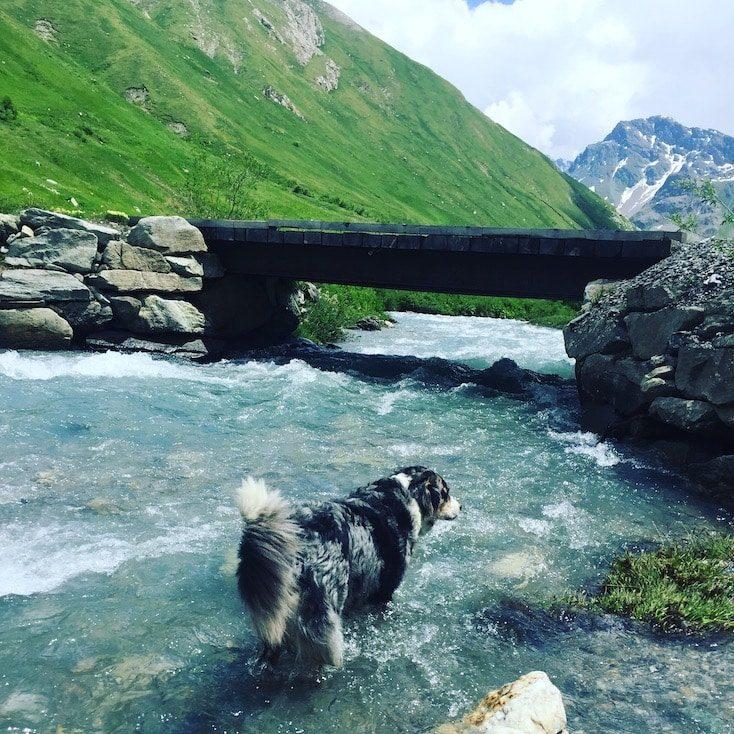 Col de l'iseran Südrampe hund wildcamping Frankreich Alpen Roadtrip Rundreise