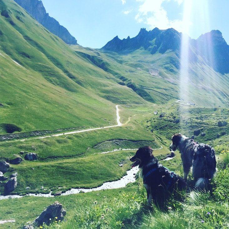 Col du Galibier Französische Alpen Frankreich hund Wandern Wanderung