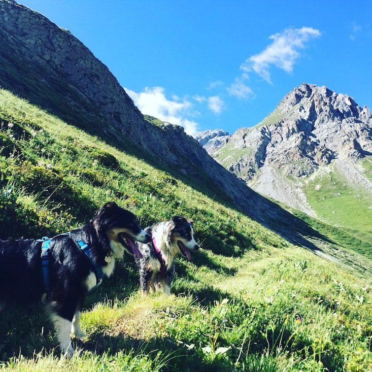 Col du Galibier Alpen Frankreich Wandern Wanderung Hund Bergtour