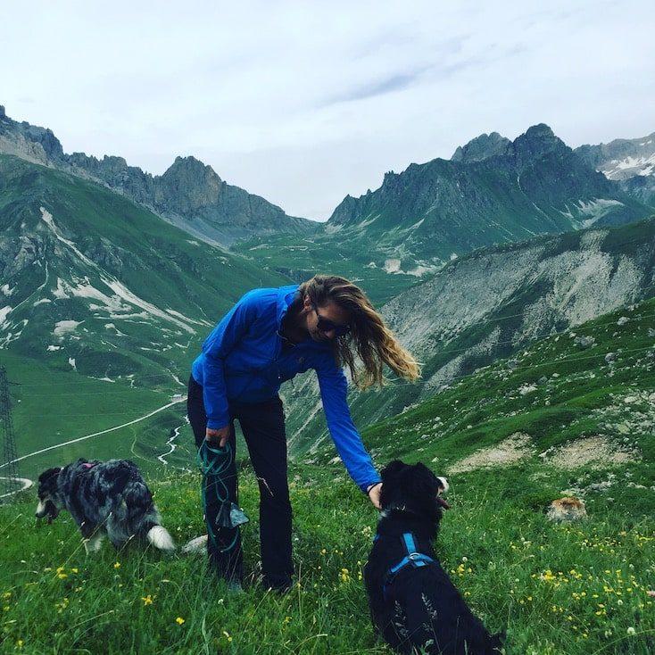 Col du Galibier Französische Alpen Pässe Frankreich Pass Hund Wanderung