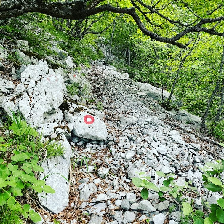 Crni Vrh Wandern Hiking Kroatien Velebit Croatia berge Rundtour Hund