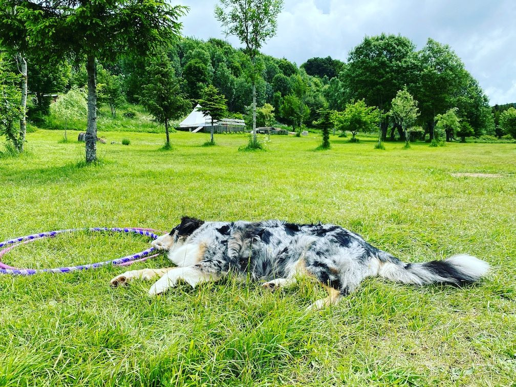 Camping mit Hund in Kroatien hundefreundlich naturbelassen Australian Shepherd wandern