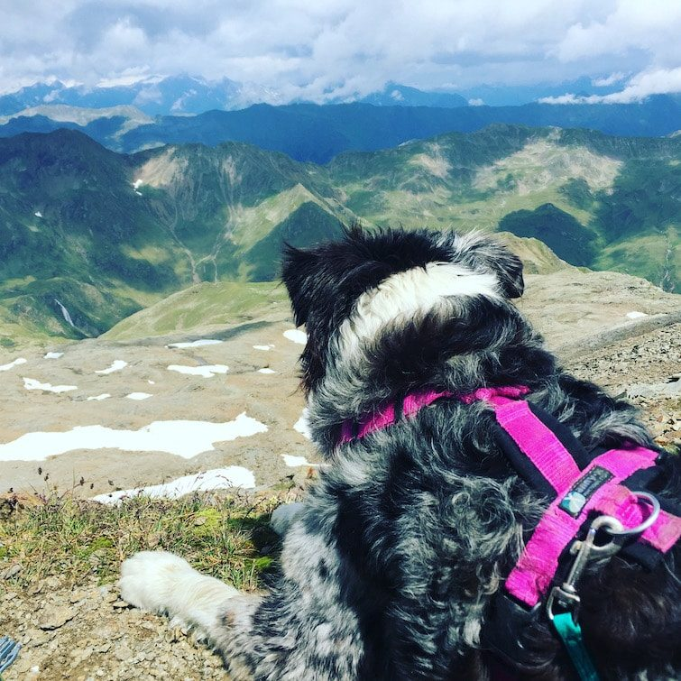 Wandern mit Hund Österreich Hochgrabe Hohe Tauern Winkeltal Villgratental
