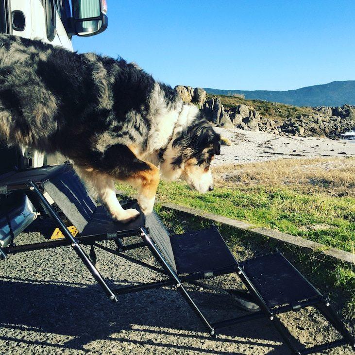 Friedrischs Hundetreppe Einstiegshilfe Hund Hunderampe Camping Zubehör