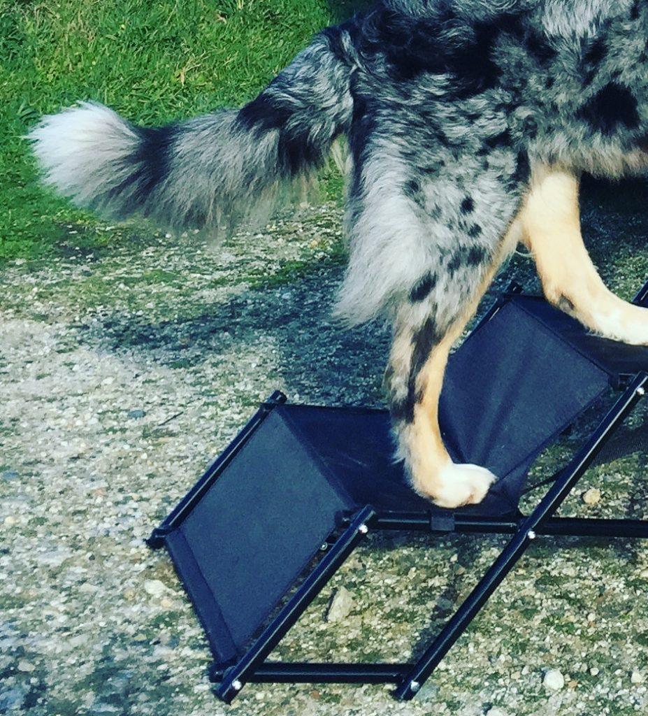 Friedrischs Hundetreppe Hunderampe Einstiegshilfe Auto Wohnmobil Camping mit Hund