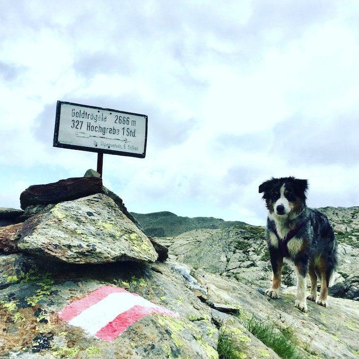 Wandern mit Hund Hochgrabe Osttirol Winkeltal Villgratental Hohe Tauern Australian Shepherd
