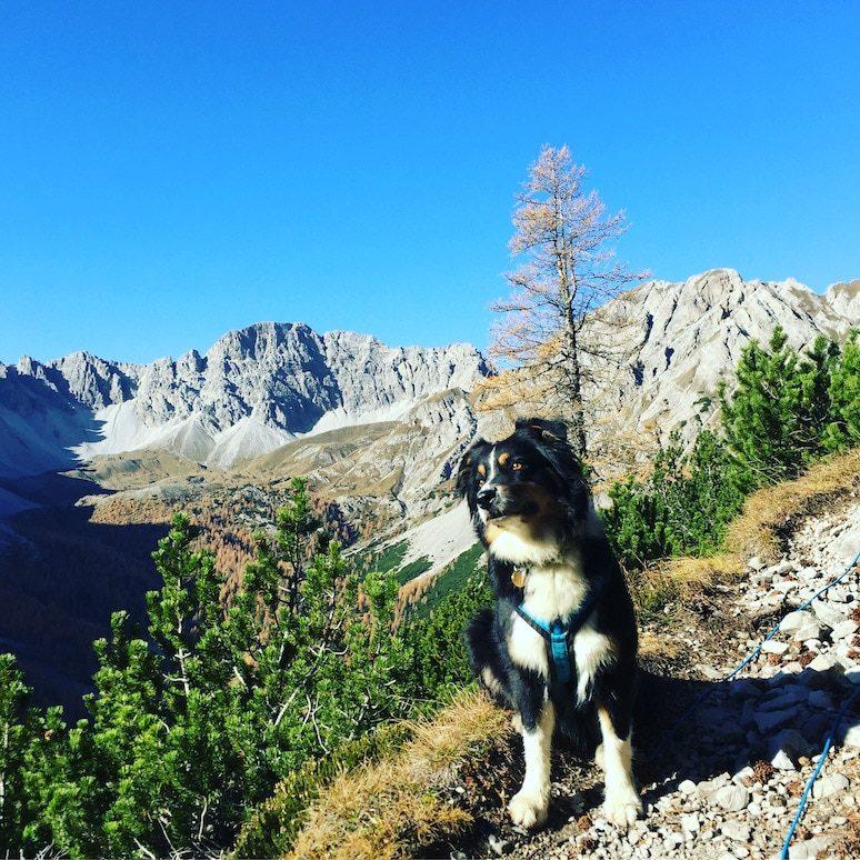 Osttirol Wandern mit Hund Lienzer Dolomiten Tristach Karlsbader Hütte