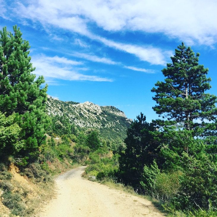 Südfrankreich Frankreich Wandern mit Hund Wanderung Pays Cathare Karstlandschaft