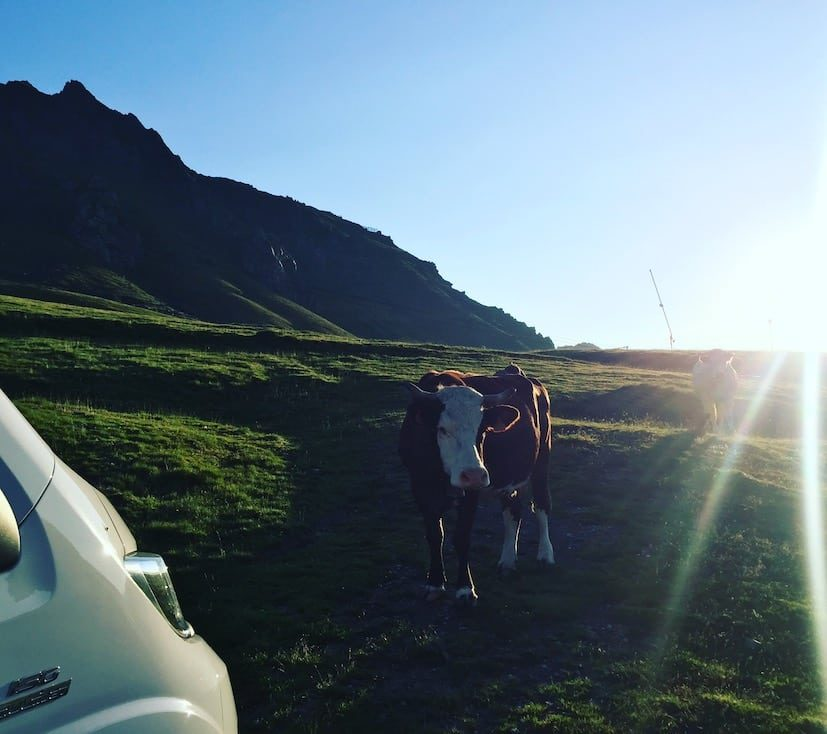 Tour de France Col du Tourmalet Camping Wohnmobil Hund Pyrenäen