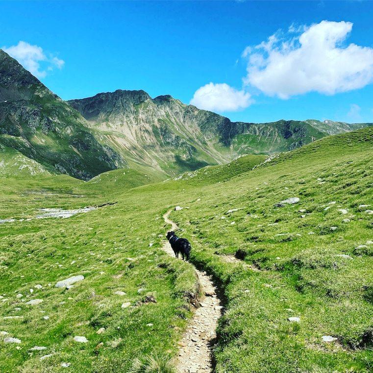 Wandern mit Hund in Osttirol Hohe Tauern Degenhorn Winkeltal Villgratental Herz-Ass