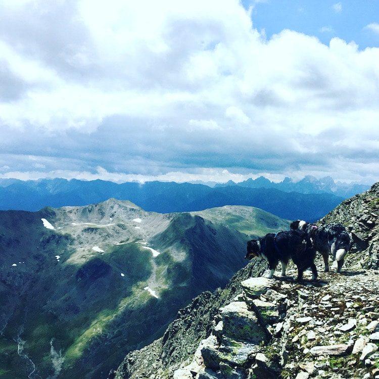 Wandern mit Hund in Osttirol Hohe Tauern Trittsicherheit Hochgrabe Villgratental Winkeltal