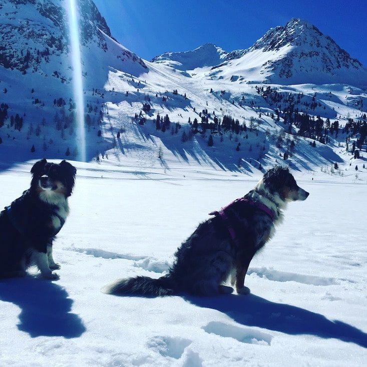 Osttirol Defreggental Stallersattel Wintercamping Hund Schneeschuhe