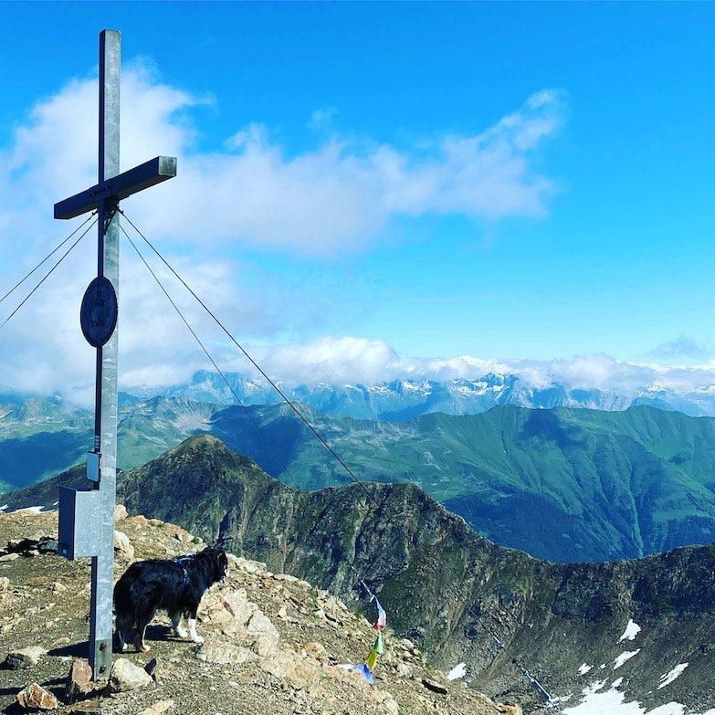 Osttirol Wandern mit Hund Villgratental Hohe Tauern Australian Shepherd