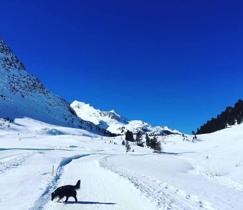 Osttirol Staller Sattel Defreggental Wintercamping Hund Schneeschuhwandern