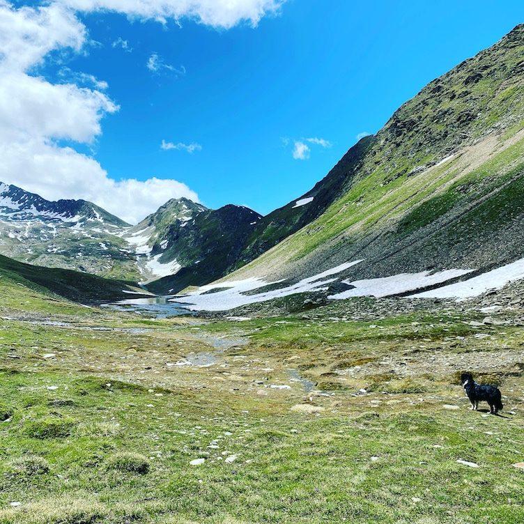 Wandern mit Hund Hohe Tauern Villgratental Villgratner Berge Degenhorn