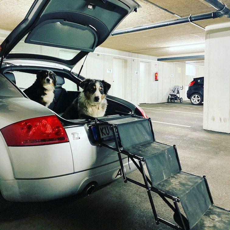 Friedrischs Hundetreppe Hunderampe Hundeleiter Einstiegshilfe Hund Auto