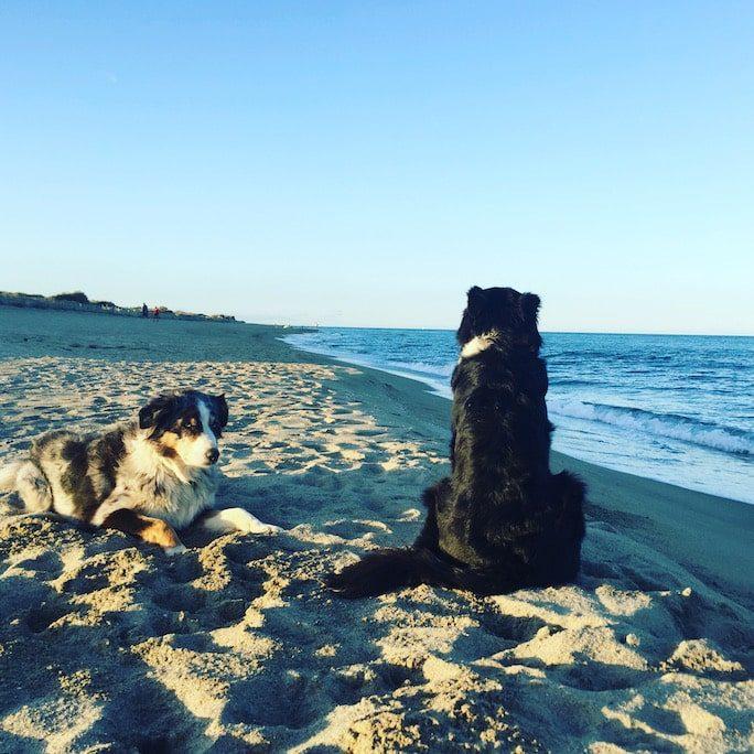 Camping mit Hund urlaub mit Hund Mittelmeer Frankreich Südfrankreich Rundreise le Brasilia Canet en Roussillon