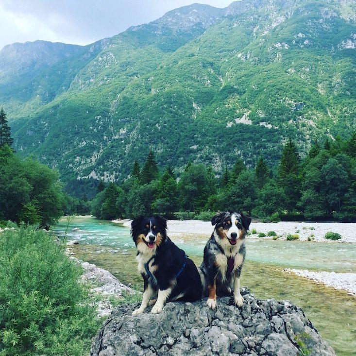 Soca Tal Camping und wandern mit Hund Slowenien Roadtrip Triglav Nationalpark Australian Shepherd