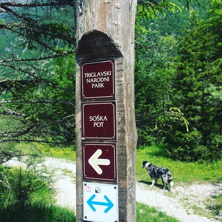 Soska Pot Wandern mit Hund Slowenien Weitwandern Alpe Adria Triglav Nationalpark
