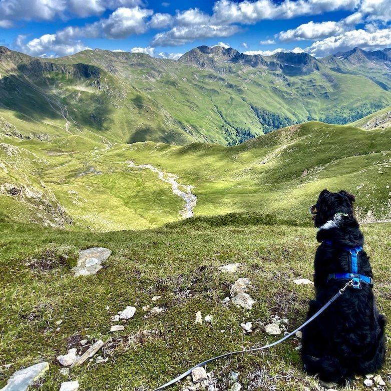 Wandern mit Hund in Osttirol Hohe Tauern Leinenpflicht Villgratental Degenhorn