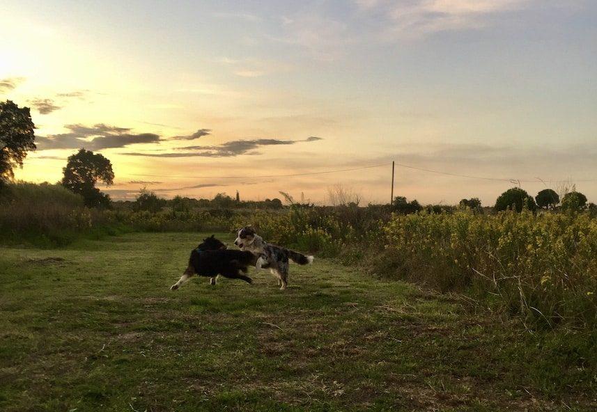Frankreich Kastenwagen Van Wohnmobil Stellplatz Bauernhof-Camping Südfrankreich Reisen mit Hund