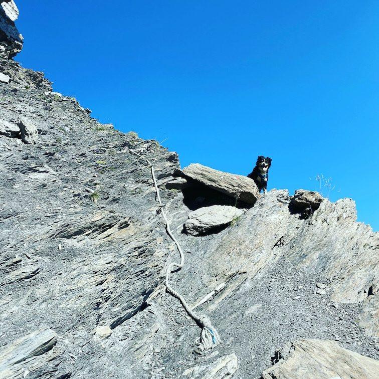 Sentiero Dino Icardi Wandern mit Hund Cottische Alpen Colle dell Infernetto