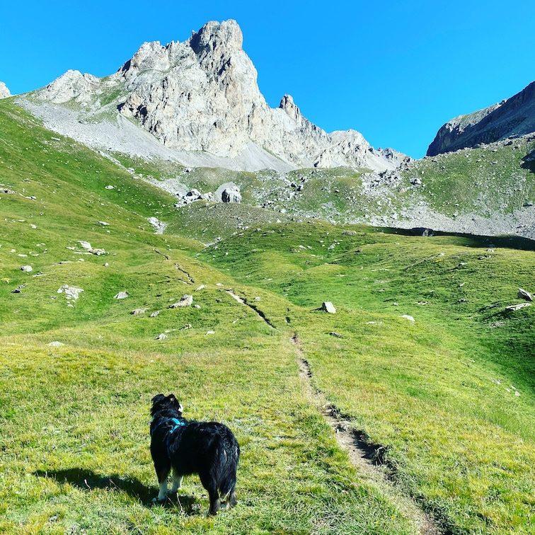 Valle Maira Unterwegs mit Hund Wanderung Sentiero Dino Icardi Vallone dell infernetto